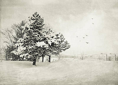Winter White Poster by Julie Palencia