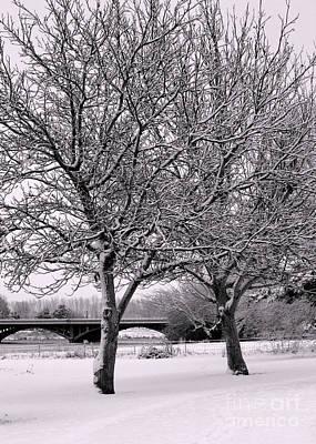 Winter White Trees Poster
