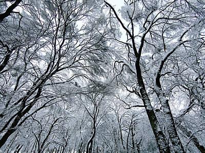 Winter Wonder Poster by Jeff Klingler