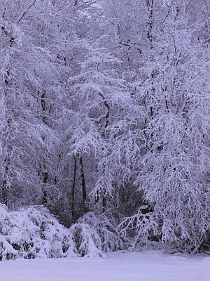 Winter Wonderland 1 Poster by Mike McGlothlen