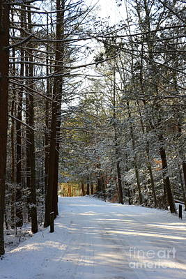 Winter Wonderland At Bigelow Hollow   Poster