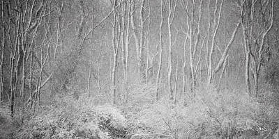 Poster featuring the photograph Winter Wood 2013 by Joan Davis