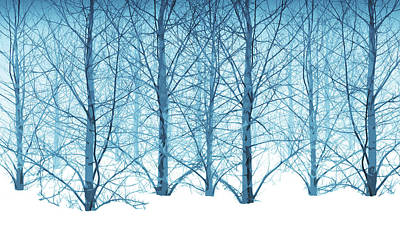 Winter Woodland In Blue Poster