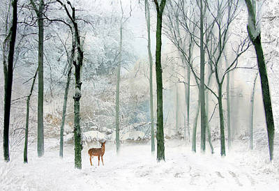 Winter Woodland Poster by Jessica Jenney