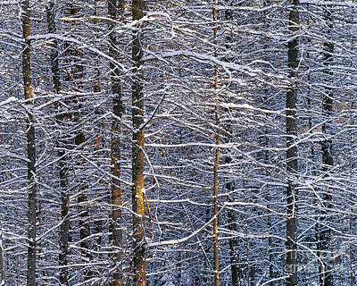 Poster featuring the photograph Winter Woods by Alan L Graham