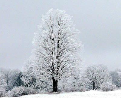 Winter's Blanket Poster by Elizabeth Holland