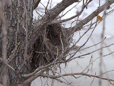 Winter's Nest Poster