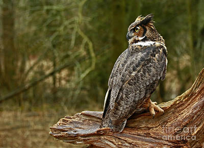 Wisdom Awaits Majestic Great Horned Owl Poster