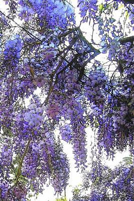 Poster featuring the photograph Wisteria - Fun Version 3 by Jodie Marie Anne Richardson Traugott          aka jm-ART