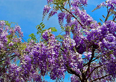 Wisteria In Bloom Poster