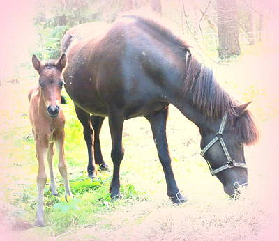 A Newborn Little Filly With Her Mum Poster