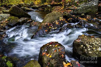 Wolf Creek Autumn Poster by Thomas R Fletcher