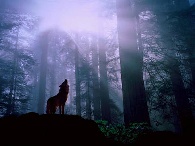 Wolf In The Woods Poster