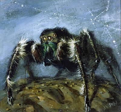 Wolf Spider A Gigantic Hairy Spider Poster by Stanley Meltzoff / Silverfish Press