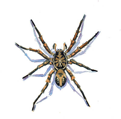 Wolf Spider Poster by Katherine Miller