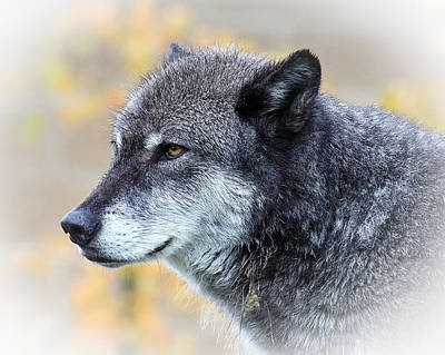 Poster featuring the photograph Wolf by Steve McKinzie
