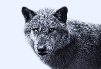 wolfman II Poster by Joachim G Pinkawa