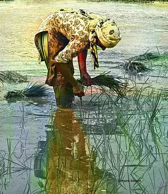 Woman In The Paddy Fields Poster