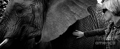 Woman Touching An Elephant Poster