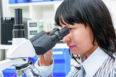 Woman Using A Lab Microscope Poster by Wladimir Bulgar