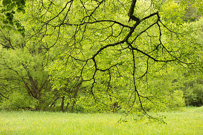 Wonderful Green Colors Of Spring Poster