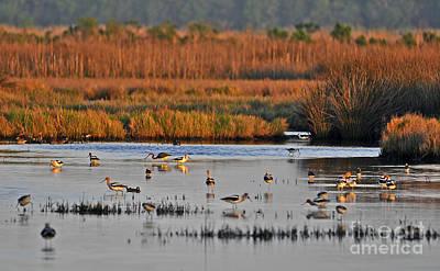 Wonderful Wetlands Poster