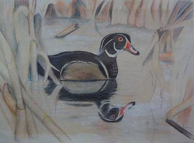 Wood Duck Poster by Peggy Clark