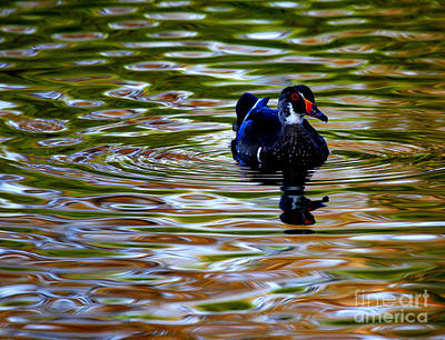 Poster featuring the photograph Wood Duck Reflections by John F Tsumas