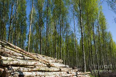 Wood Pile At Springtime Poster