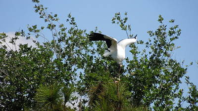 Poster featuring the photograph Wood Stork by Ron Davidson