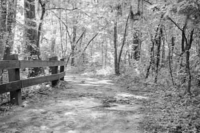 Wooded Path Poster by Matt Owen