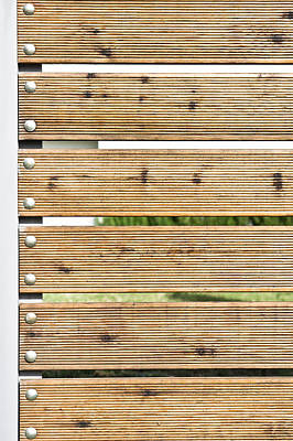 Wooden Fence Poster by Tom Gowanlock
