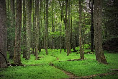 Woodland Path In Cades Cove Poster by Randall Nyhof