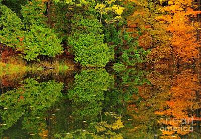 Woodland Reflection Poster by Terri Gostola
