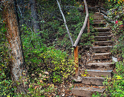 Woodland Stairs In Aspen Colorado Poster by Julie Magers Soulen