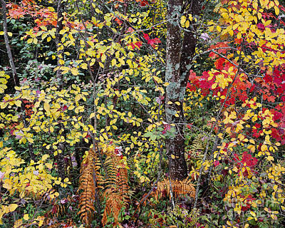 Poster featuring the photograph Woodland Tapestry by Alan L Graham