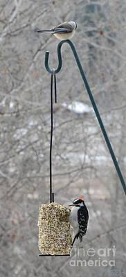 Woodpecker And Chickadee Poster