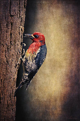 Woodpecker Poster by Maria Angelica Maira