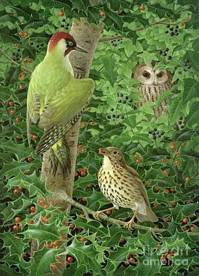 Woodpecker Owl And Thrush  Poster by Birgitte Hendil