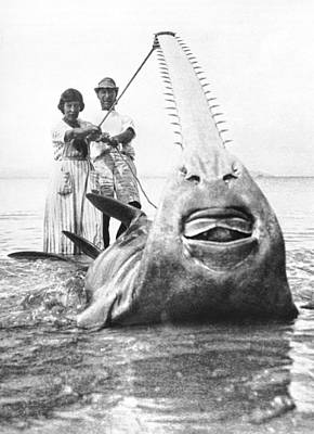 World Record Sawfish Poster by Underwood Archives
