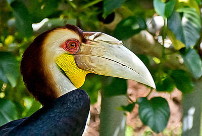 Wreathed Hornbill Poster by Rieno Dorrius