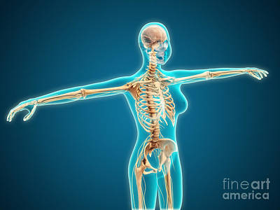 X-ray View Of Female Body Showing Poster by Stocktrek Images