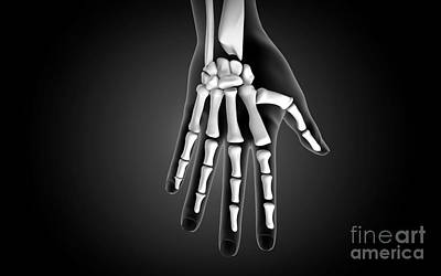 X-ray View Of Human Hand Poster by Stocktrek Images