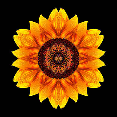 Yellow And Orange Sunflower Vi Flower Mandala Poster