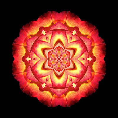 Yellow And Red Rose II Flower Mandalaflower Mandala Poster