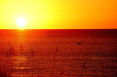 Yellow And Red Sunrise With Pelican Poster by Michael Thomas