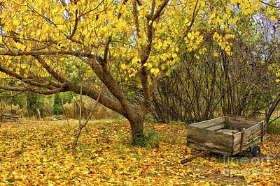 Yellow Autumn Leaves And Wooden Wagon Poster