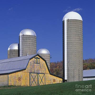 Yellow Barn And Silos - Fm000084 Poster by Daniel Dempster