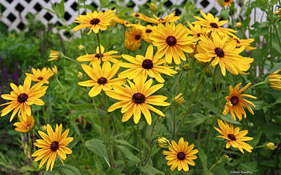 Yellow Daisy Flowers #2 Poster