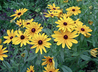 Yellow Daisy Flowers #3 Poster